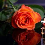 Maler und Rose